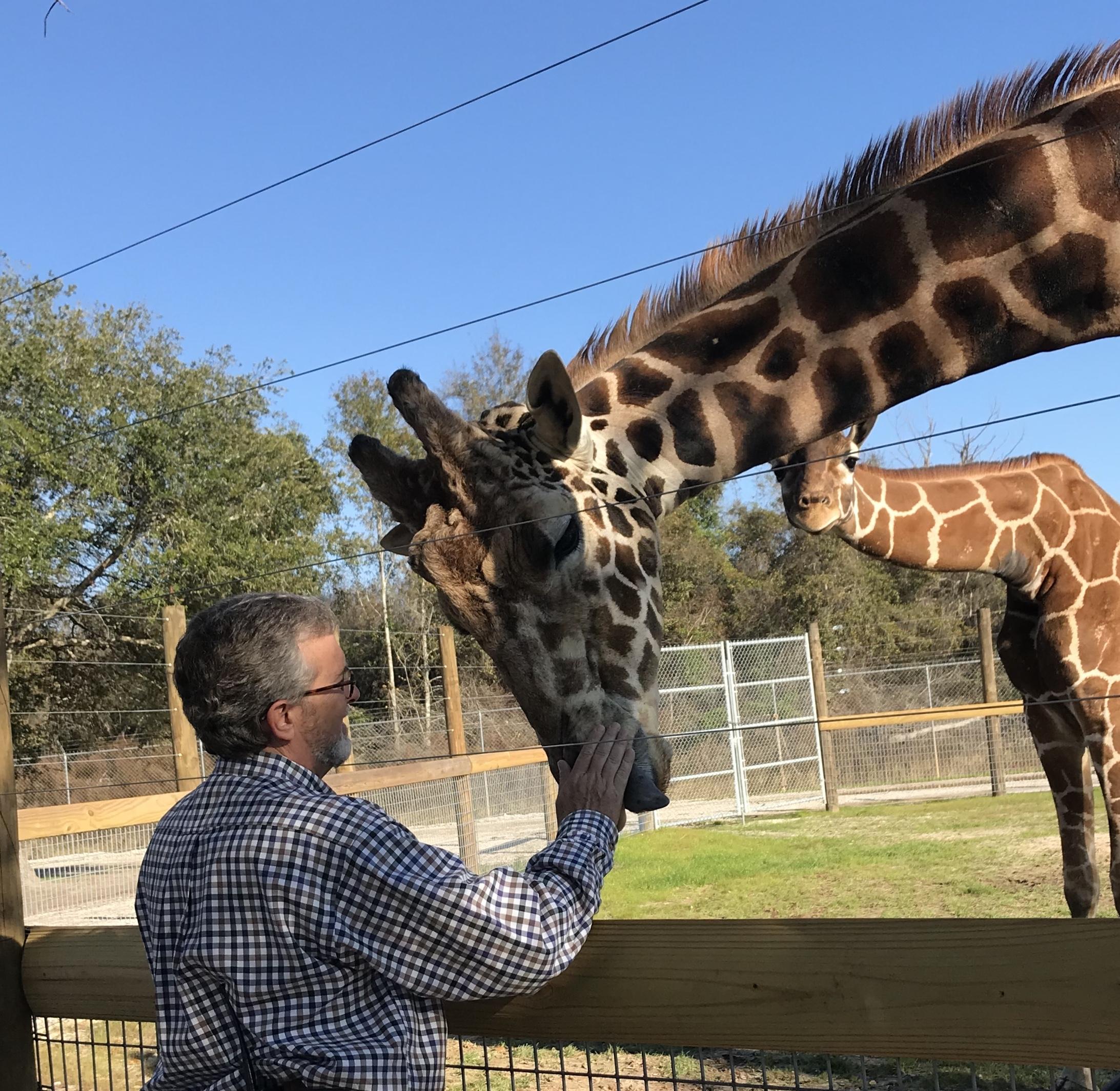 Giraffe with zoo director