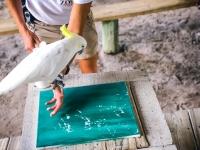 Animal Art Safari Artists Gallery Image 172