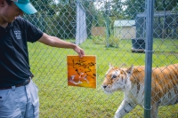 Animal Art Safari Artists Gallery Image 180