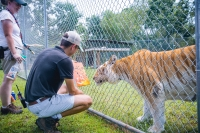 Animal Art Safari Artists Gallery Image 181