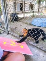 Animal Art Safari Artists Gallery Image 188