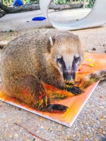Animal Art Safari Artists Gallery Image 189