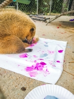 Animal Art Safari Artists Gallery Image 190