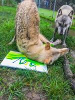 Animal Art Safari Artists Gallery Image 197