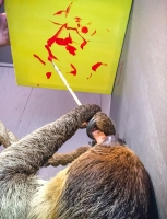 Animal Art Safari Artists Gallery Image 200