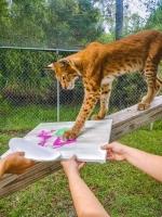 Animal Art Safari Artists Gallery Image 202