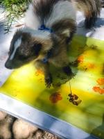 Animal Art Safari Artists Gallery Image 203