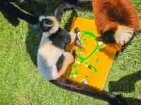 Animal Art Safari Artists Gallery Image 205