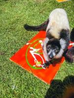Animal Art Safari Artists Gallery Image 206