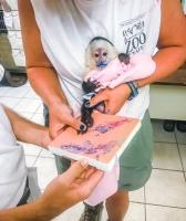 Animal Art Safari Artists Gallery Image 209