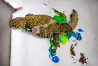 Animal Art Safari Artists Gallery Image 213