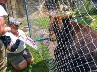 Animal Art Safari Artists Gallery Image 215