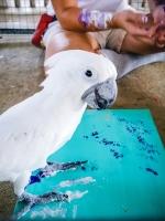 Animal Art Safari Artists Gallery Image 217