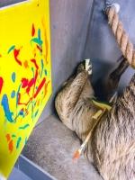Animal Art Safari Artists Gallery Image 218