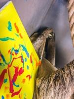 Animal Art Safari Artists Gallery Image 219