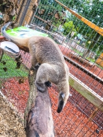 Animal Art Safari Artists Gallery Image 220