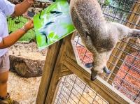Animal Art Safari Artists Gallery Image 221