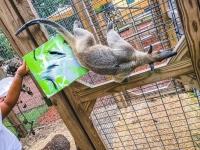 Animal Art Safari Artists Gallery Image 222