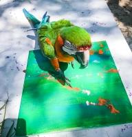 Animal Art Safari Artists Gallery Image 224