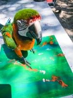 Animal Art Safari Artists Gallery Image 225