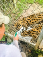 Animal Art Safari Artists Gallery Image 226