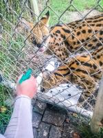 Animal Art Safari Artists Gallery Image 227
