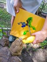 Animal Art Safari Artists Gallery Image 231