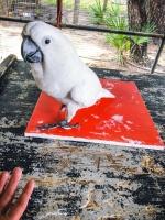 Animal Art Safari Artists Gallery Image 234