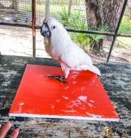Animal Art Safari Artists Gallery Image 235