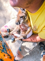 Animal Art Safari Artists Gallery Image 238