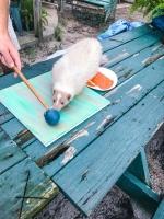 Animal Art Safari Artists Gallery Image 241