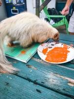 Animal Art Safari Artists Gallery Image 242