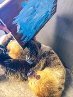 Animal Art Safari Artists Gallery Image 245