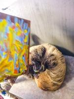 Animal Art Safari Artists Gallery Image 246