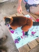 Animal Art Safari Artists Gallery Image 250
