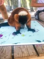 Animal Art Safari Artists Gallery Image 252