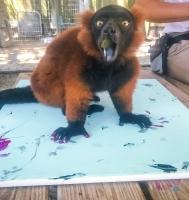 Animal Art Safari Artists Gallery Image 253