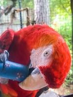 Animal Art Safari Artists Gallery Image 255