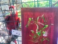 Animal Art Safari Artists Gallery Image 258