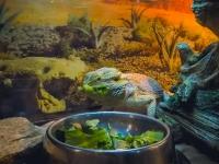 Foodies Gallery Image 773